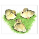 Snowy Mallard Ducklings Small Poster