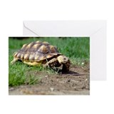Gummer and Lady Greeting Cards (Pk of 10)