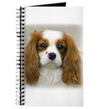 Cavalier King Charles Journal