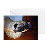 Pugs in a basket Greeting Cards (Pk of 10)