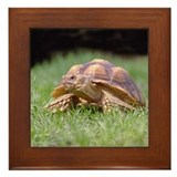 Gummer Looking Left Framed Tile