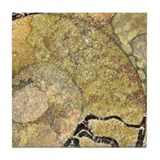 Ammonite Fossil Tile Coaster