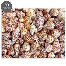 The Abcs Of Alphabet Cone Shells Puzzle