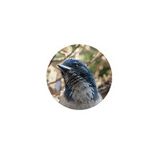 Expressive Western Scrub Jay Mini Button