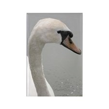 ...Mute Swan... Rectangle Magnet