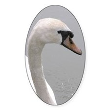 ...Mute Swan... Oval Decal