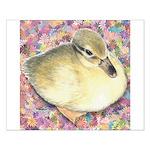 Snowy Mallard Duckling Small Poster