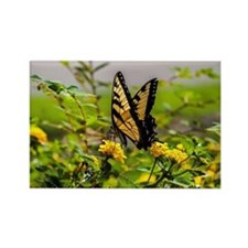 Funny Butterflies Rectangle Magnet
