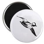 Bufflehead Sketch Magnet