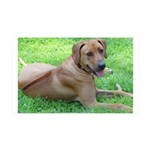 Ridgeback 35x21 Wall Decal