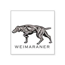 "Cute Weimaraner art Square Sticker 3"" x 3"""