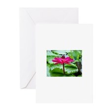 Pink Lilly Greeting Cards