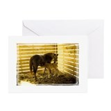 Funny Neglected horse Greeting Cards (Pk of 10)