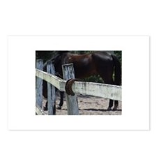 Funny Neglected horse Postcards (Package of 8)