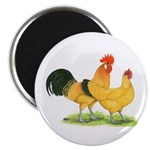 Buff Catalana Chickens Magnet