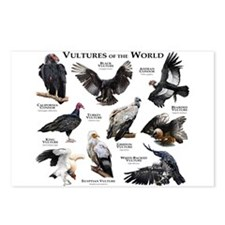 Vultures of the World Postcards (Package of 8)