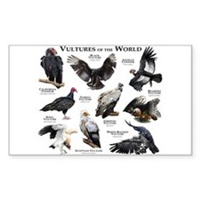 Vultures of the World Decal