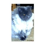 Exotic Persian Cat Sticker (Rectangle)