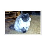 Exotic Persian Cat Mini Poster Print