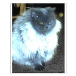 Exotic Persian Cat Small Poster