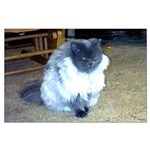 Exotic Persian Cat Large Poster