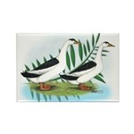 Magpie Drake and Duck Rectangle Magnet (100 pack)