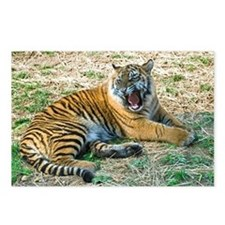 Mad Tiger Postcards (Package of 8)