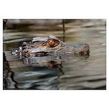 Unique Gator head