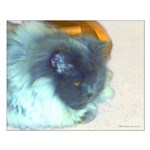 Long-Haired Blue Persian Cat Small Poster