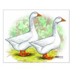 Embden Goose Pair Small Poster