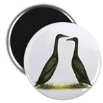 Black Runner Ducks Magnet