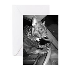 Driving Miss Frenchie Greeting Cards(Pk of 10)