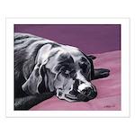Black Labrador Beauty Sleep Small Poster
