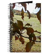Unique Focal Journal