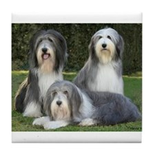 Unique Shaggy dog Tile Coaster