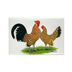 Mille Fleur Dutch Bantams Rectangle Magnet (100 pa