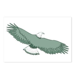 Bald Eagle Postcards (Package of 8)