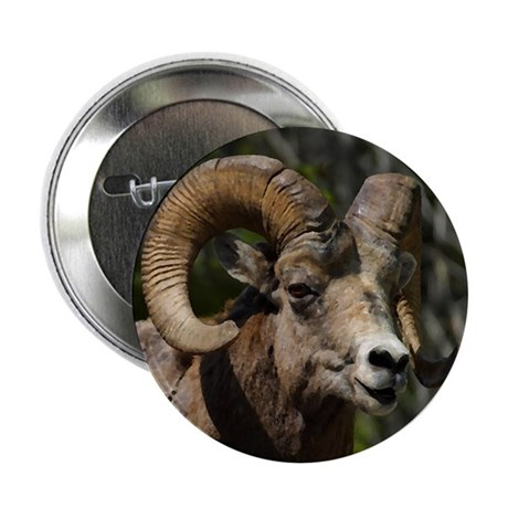 "Bighorn Sheep - Ram 2.25"" Button (100 pack)"
