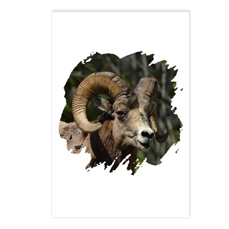 Bighorn Sheep - Ram Postcards (Package of 8)