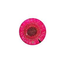Gerber Daisy Mini Button