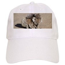 Cute Koala bear Cap