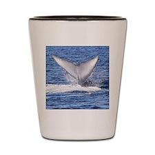 Majestic Blue Whale Flukes Shot Glass
