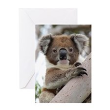 Precious Baby Koala in Eucalyptus Gum Tree Greetin