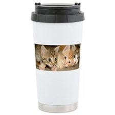 Unique Kitten photography Travel Mug