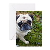 Baby's Close Up Greeting Cards (Pk of 10)