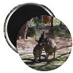 Kangaroo Mum Magnet