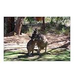 Kangaroo Mum Postcards (Package of 8)