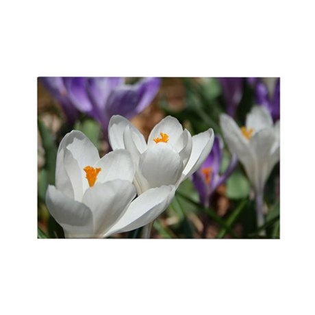 Crocus Rectangle Magnet