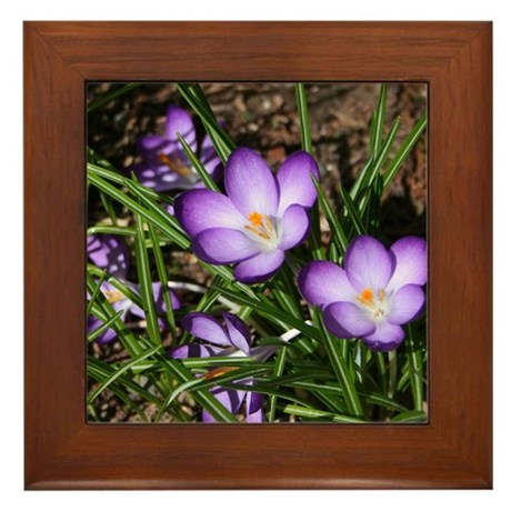 Crocus Framed Tile