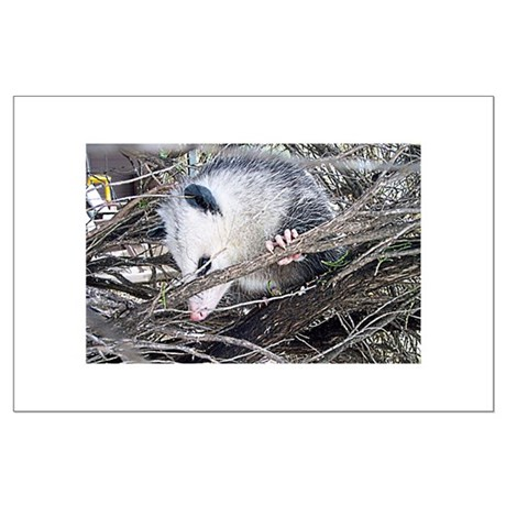 Peek-a-Boo Possum Large Poster